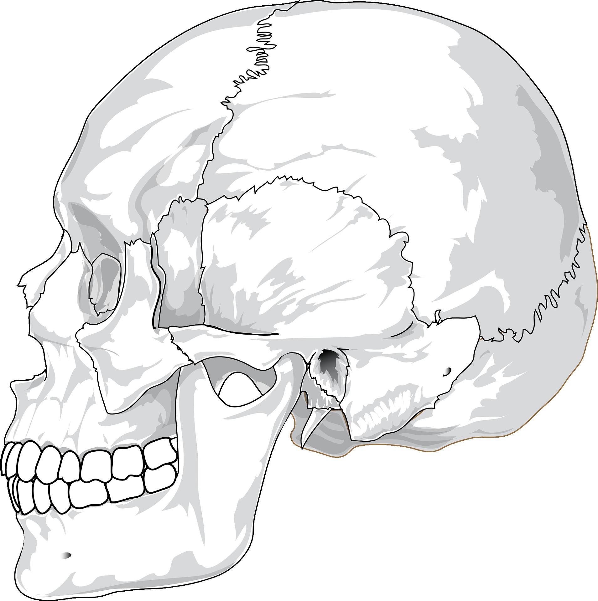 頭蓋骨と骨盤