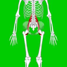 腰痛の原因となる筋肉①